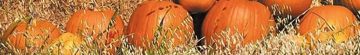 pumpkin-patch-e1534510591558.jpg