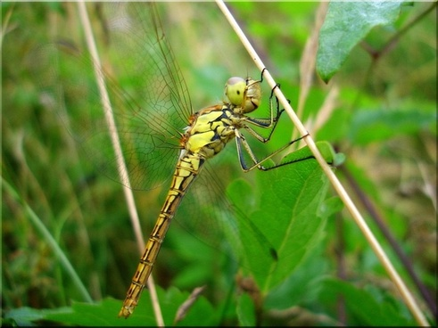 dragonfly_meadow_summer_221606